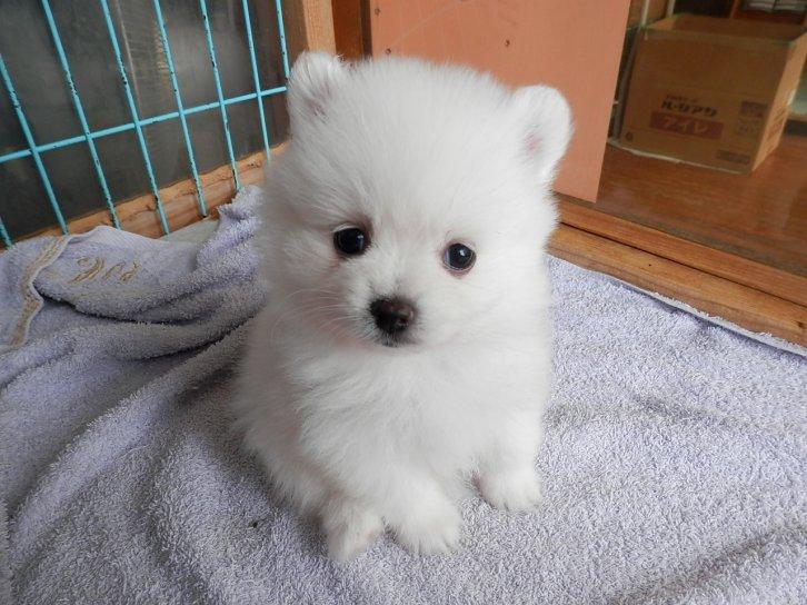 ID:1607,00379の子犬
