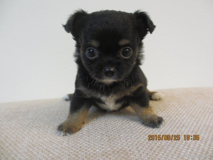 ID:1508,00130の子犬
