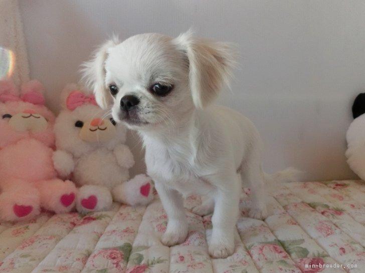 ID:1810,00780の子犬