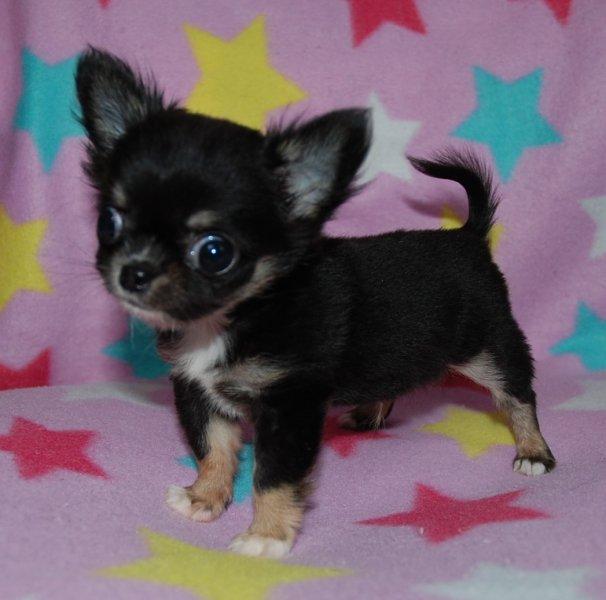 ID:1503,01014の子犬