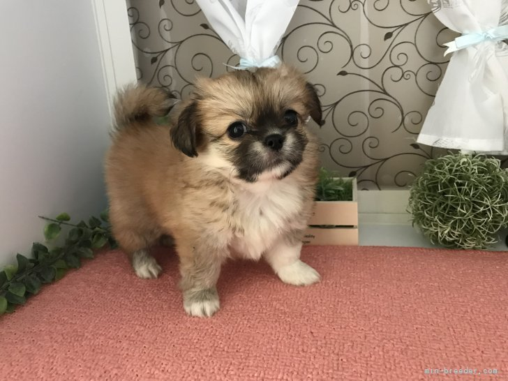 ID:1806,01836の子犬