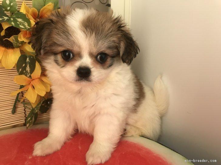 ID:1807,00272の子犬