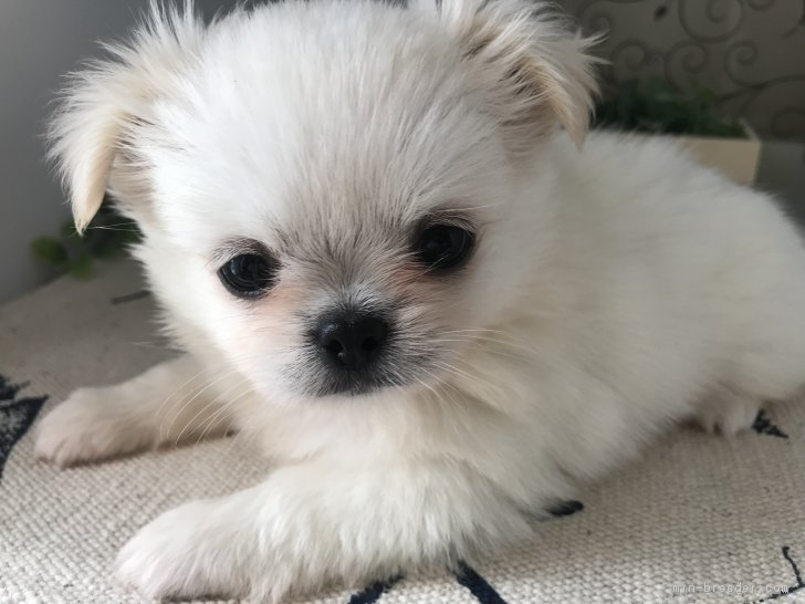 ID:1807,00933の子犬